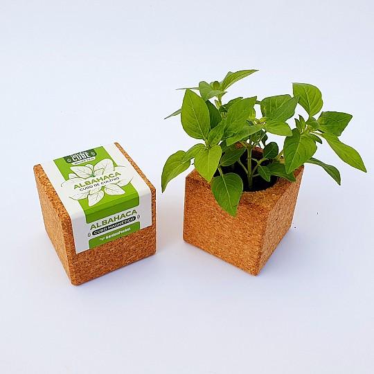 maceta magnética cube garden de albahaca