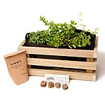 I Garden, Therefore I am Aromatic Herbs Kit