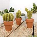 Cactus Candles Small