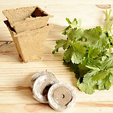 Aromatic Herbs Growing Kit