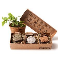 Caja Tres Bombas de Semillas de Hierbas Aromáticas