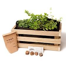 Kit de cultivo de aromáticas en jardinera de madera