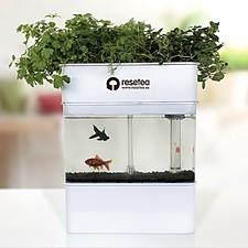 Sistema de Cultivo Acuapónico