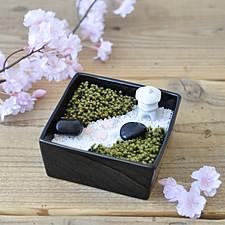 Mini jardín zen de musgo verde