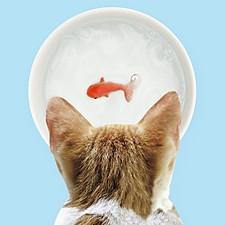 Bebedero para gatos con un pez en el fondo