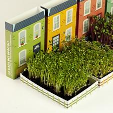 Kit de cultivo de microplantas con forma de casita