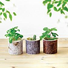 Macetas de cultivo con forma de tocones de árboles