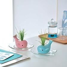 Mini maceta de cerámica con semillas en forma de ballena