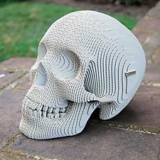 Cráneo Humano de Cartón