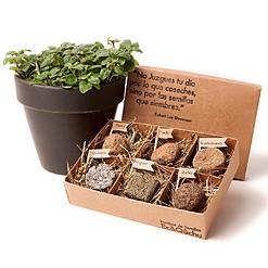 Caja con seis bombas de semillas de hierbas aromáticas