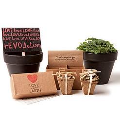 Caja de regalo con dos bombas de semillas de aromáticas