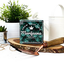 Kit de Autocultivo Falsa Marihuana