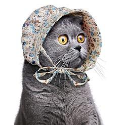 Gorro para Gatos Casa de la Pradera