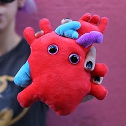 Peluche con forma de corazón anatómico