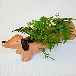 Maceta original con forma de perro salchicha