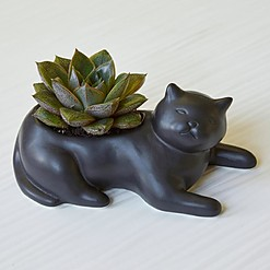 Maceta original con forma de gato negro