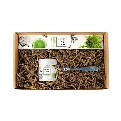 Set básico de iniciación al té matcha
