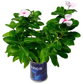 House & Terrace Plants|Gifts
