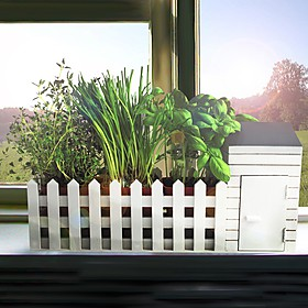Mini Huerto de Interior