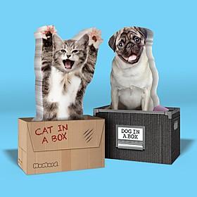 Pósits Gato o Perro en una Caja