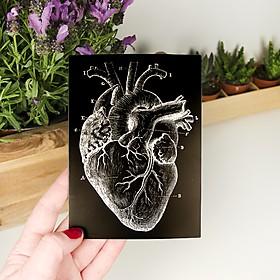 Tarjeta de felicitación con un corazón anatómico