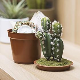 Caja Fuerte Original Cactus