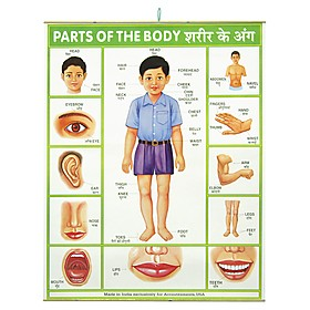 parts of the body poster it s perfect for children