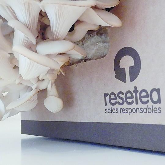 La seta ostra es un hongo de textura y sabor magníficos
