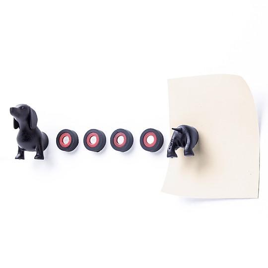 El dachshund se divide en seis imanes