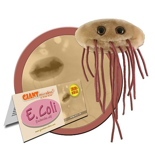 Incluye una etiqueta informativa sobre el microbio