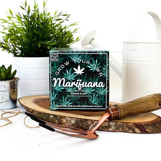 El kit de autocultivo de falsa marihuana