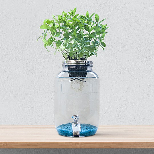 Blue Jar: el sistema de cultivo hidropónico creativo