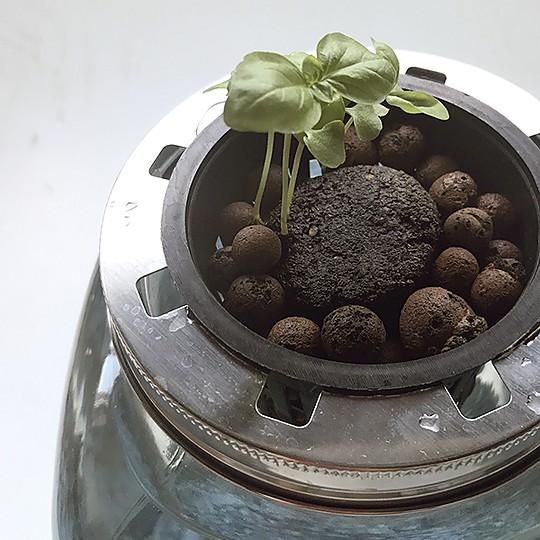 Botánica y creatividad en un solo producto