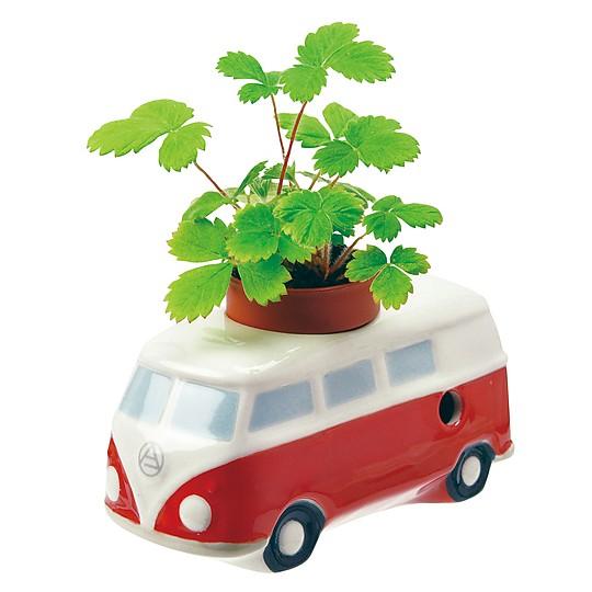 La furgoneta roja lleva semillas de fresa silvestre
