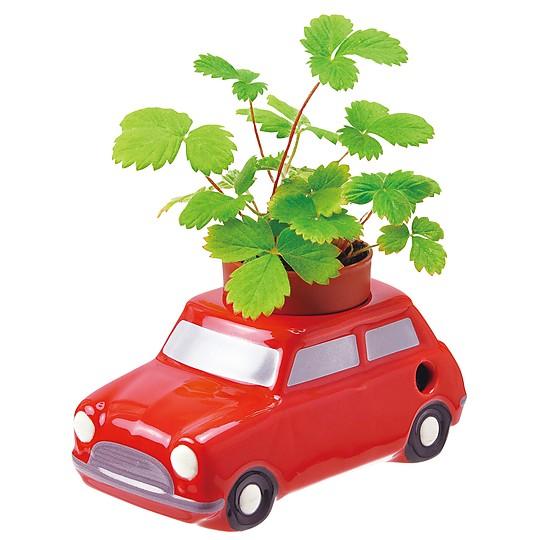El coche rojo lleva semillas de fresa silvestre