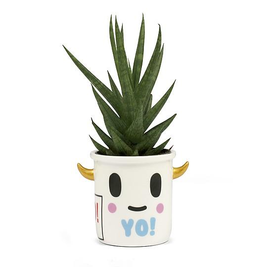 Ideal para pequeños cactus