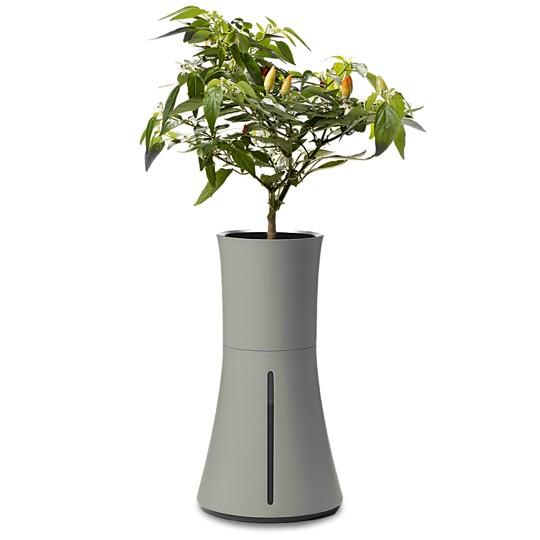 Las plantas crecen rápido y germinan siempre