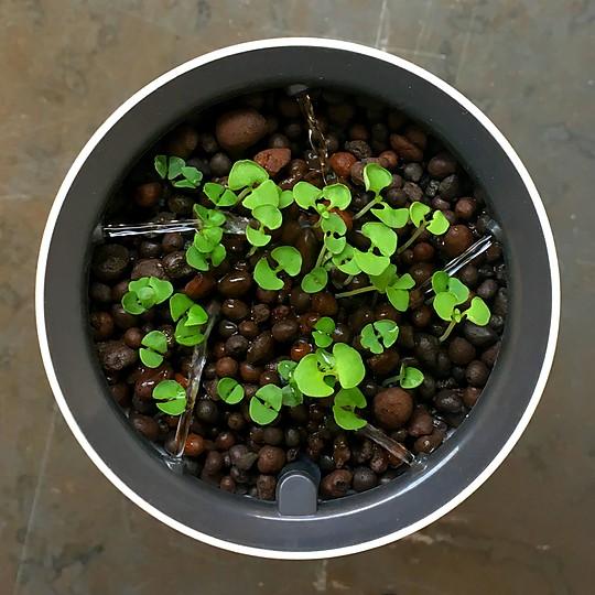 Ideal para hierbas aromáticas, chiles, fresas, tomates cherry...