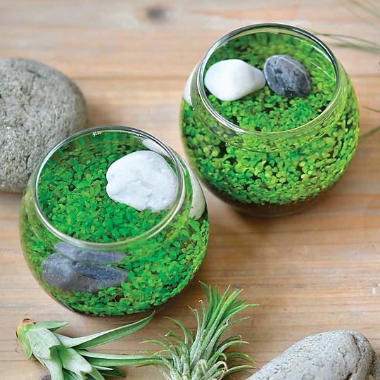 ¡Cultiva plantas acuáticas en casa!