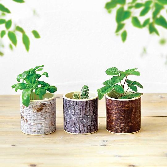 Macetas de cultivo inspiradas en tocones de árbol