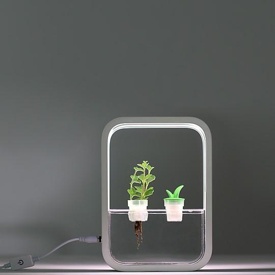 Cultivo hidropónico...