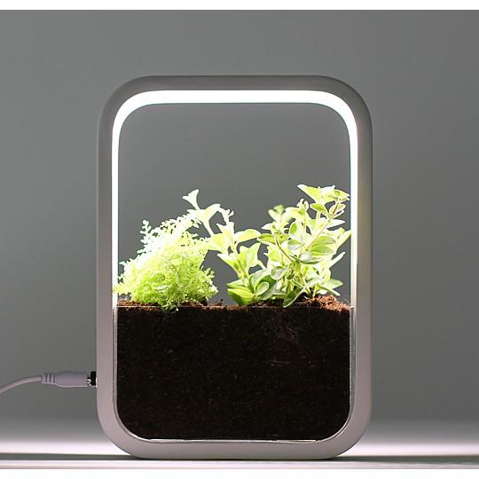 Cultiva plantas todo el año