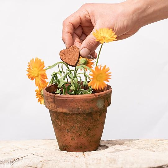 Las semillas de caléndula son fáciles de recoger para volver a sembrarlas