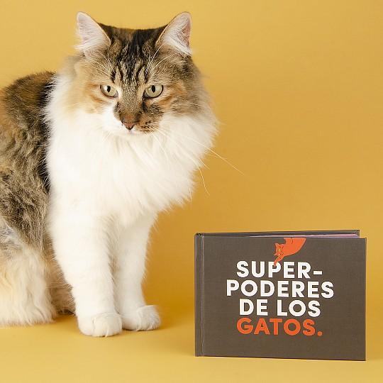 ¿Por qué nos flipan los gatos?