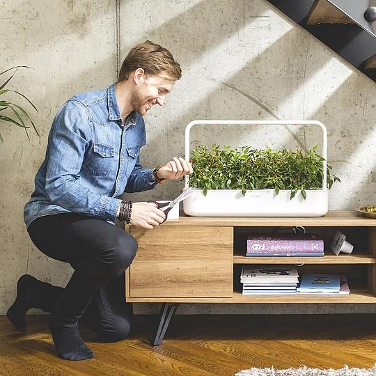 Podrás cultivar plantas en casa de forma muy sencilla, rápida y con éxito asegurado.
