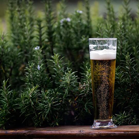 Pilsen Ale (eco): cerveza rubia aromatizada con un lúpulo noble