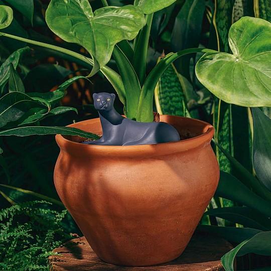 Mantén tus plantas perfectamente regadas