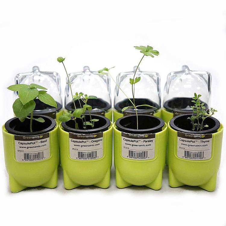 Planta en una c psula or gano for Plantas aromaticas para jardin