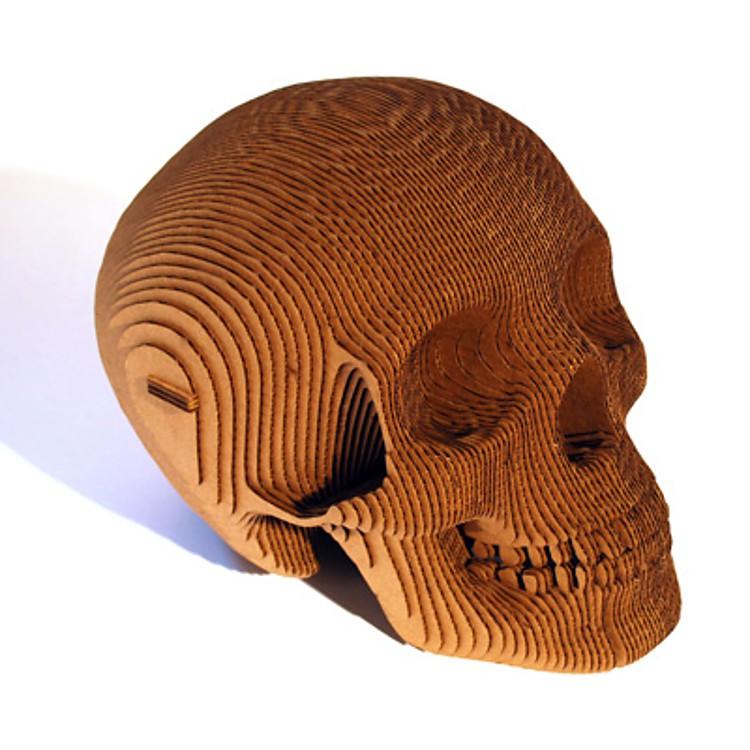 Cráneo Humano de Cartón \