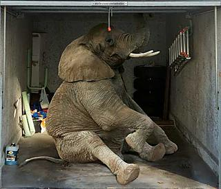 There's an elephant in your garage... or so it seems